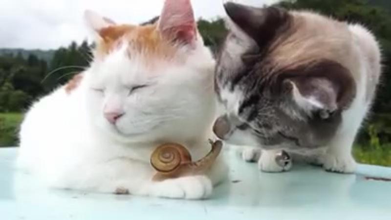 Кот, познавший дзен и бесстрашная улитка