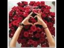 багато роз