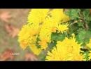 🍁 Colors Of Autumn In Kashmir 🍁 Цвета осени в Кашмире 🍁