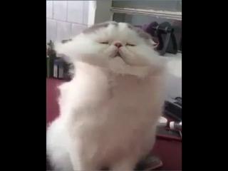 Кайфующий котейка