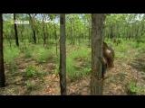 «Самые странные в мире: Звериные баталии» (Документальный, природа, животные, 2011)