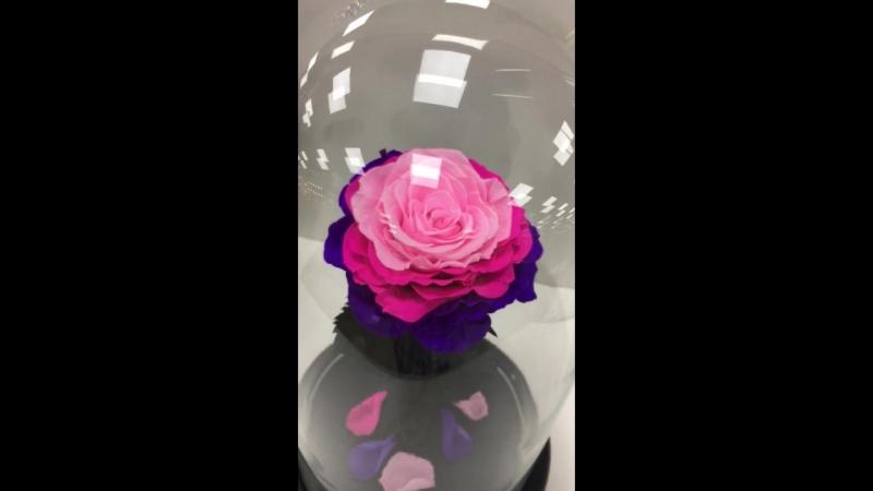 Роза в Колбе Ялта Крым Вечная Роза Красавица и Чудовище Сказка