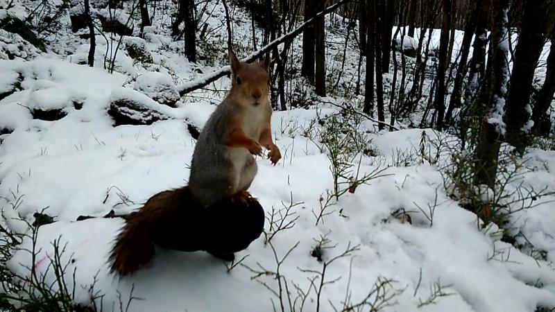 Шустрик нашел тёпленькое местечко на рукавичке