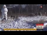 В бой на собачьих упряжках: кадры учений дальневосточных курсантов #Арктика