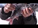 Трофейная рыбалка на саянском озере Экспедиция в Саяны