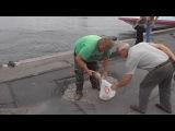 Мужик,таки,отхватил увесистого леща!Нева.Fishing on Neva river,Russia