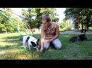 как научить собаку играть? если она больше любит есть?