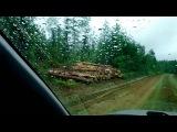 Пилят лес в Тернейском районе Приморского края
