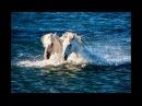 Морские лошади камаргу национальное достояние Франции