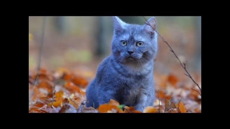 Пушистики подымающие настроение! Милые котэ!