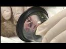 Ультразвуковая чистка зубов у хорька Limpieza dental de Hurones con Ultrasonido