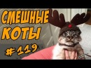 Смешные Коты Кошки До Слёз Приколы с котами и кошками 2018 Funny Cats