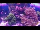 Крокус Сити Океанариум, моря и океаны, полная версия.