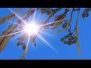 День весеннего равноденствия в Царском Селе. Астрономическая весна пришла!