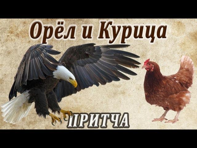 Орёл и Курица (Мудрая притча о предназначении человека и его самооценке)