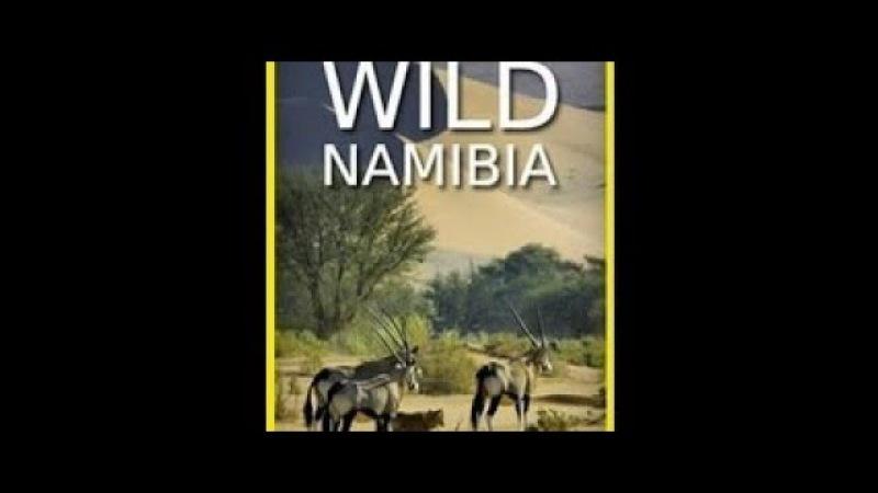 Жизнь по законам саванны Намибия