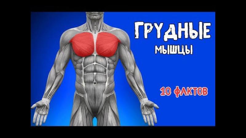 ГРУДНЫЕ МЫШЦЫ. 10 ФАКТОВ. Биомеханика, Тренировки, Анатомия.