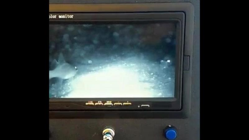 Ещё видео со дна Чудского озера