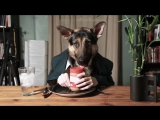 Собака ест в ресторане под музыку