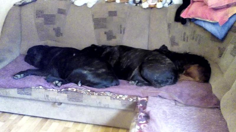 Банда оккупировала диван.