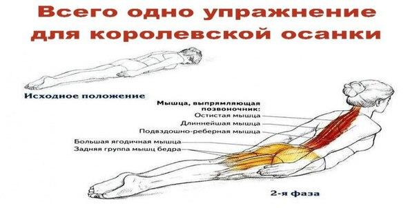 Всего одно упражнение для королевской осанки Разгибание спины лежа — это простое базовое упражнение, которое широко используется в медицине и спортивных тренировках. Благодаря ему вы сможете наконец избавиться от сутулости и неприятных ощущений в позвоноч