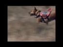 «Собачья работа 56. Дакота из поисково-спасательной службы. специальный помощник» Познавательный, 2003