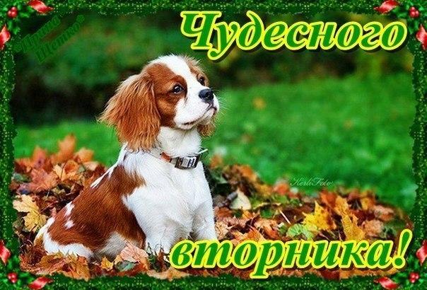 Хорошего дня картинки - mirpozitivaru