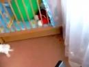 Трусливый кролик испугался лопнувшего воздушного шарика
