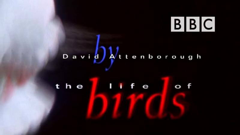 BBC Жизнь Птиц Фильм 8