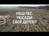 Наш лес. Посади своё дерево в Балашихе
