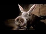 Топ 5 Самые необычные существа на планете - Невероятные факты - странные животны