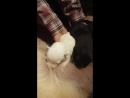 Яра кормит щенков