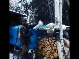 Необычная гостья забрела к охотникам в Якутии