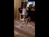 этюд) в исполнении Алисы и Гуффика
