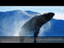 Всемирный день китов и дельфинов