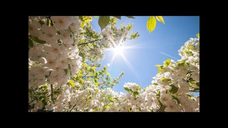 Я сегодня увидала,что на улице весна.