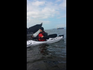 Whale surprises kayakers with up-close wild encounter.