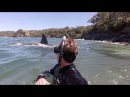 Swimming with orca in New Zealand