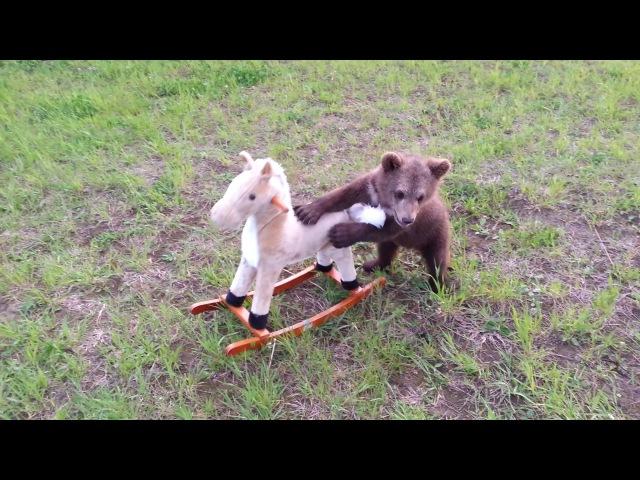 Медвежонок Мансур играет с лошадкой