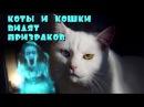 Кошки и коты видят призраков