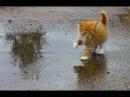 Смешные кошки видео до слез Приколы Тест на психику 2018 1 Кошки ТОП 50