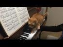 ショパン「革命」(Chopin Etude Op.10-12) ピアノ練習中にネコ乱入!