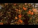 Peckham October 2016 shot on Kodak 160G Super 8 film expired 1977