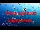 Очень красивое видео океан. Подводные съёмки. Морская флора и фауна. Рыбы. Коралл