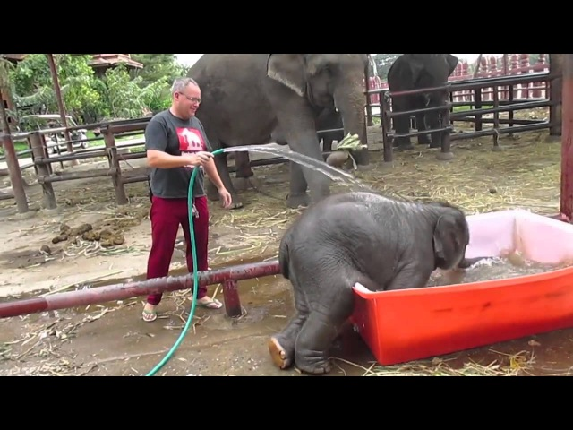 Маленький слоненок принимает ванну