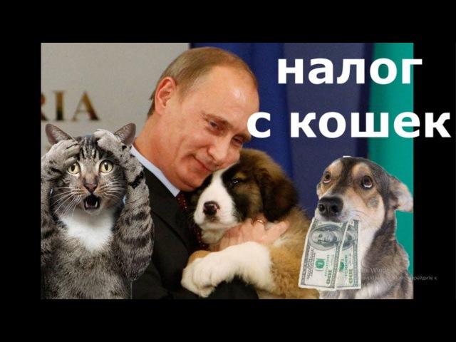 Налог на домашних животных принимает ГОСДУМА
