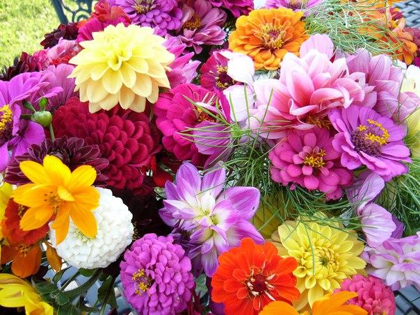 Любовь подобна цветам. Притча в изложении Ошо