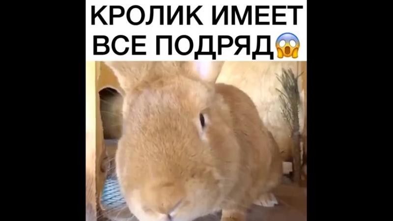 ВИДЕО ДОЛБОЕБА (10)