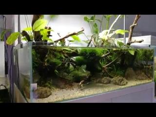 Shallow tank - Paludarium - Ecoarium.mp4