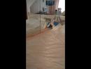 Наша кошка играет с зеркалом